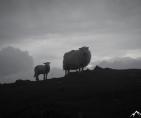 Wales Snowdon 1085
